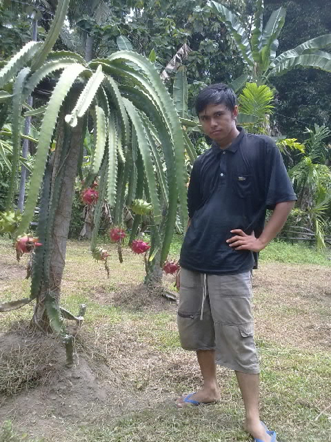 buah naga.jpg