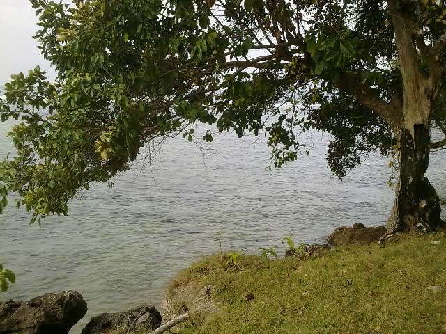 pohon taluak tampuruang.jpg