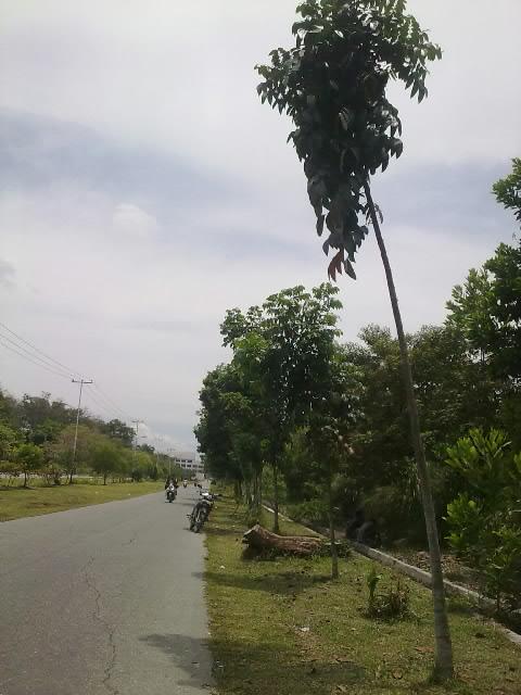 pohonn.jpg
