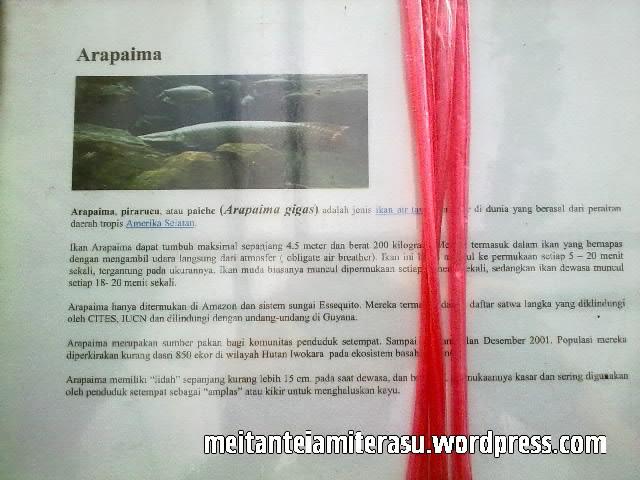 ikan arapaima.jpg